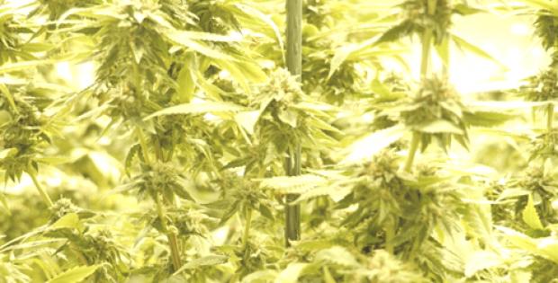 vivo cannabis completes construction greenhouse